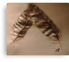 A gift of Feathers Canvas Print