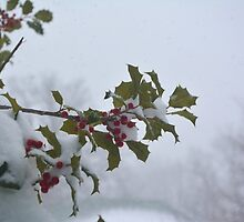 Snow on the holly by stlmoon