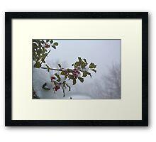 Snow on the holly Framed Print
