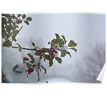 Snow on the holly Poster