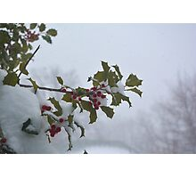 Snow on the holly Photographic Print