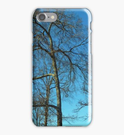 Bare Trees iPhone Case/Skin