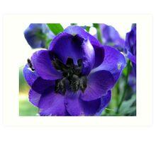 Tall And Purple Delphinium Art Print