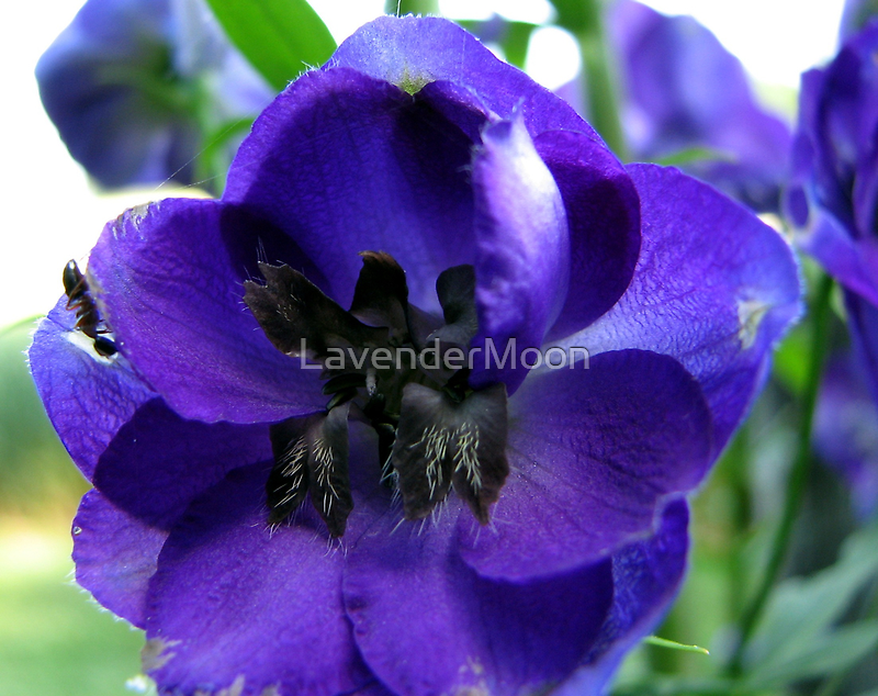 Tall And Purple Delphinium by LavenderMoon