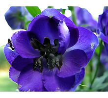 Tall And Purple Delphinium Photographic Print
