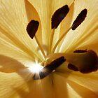 Sun burst by Kimberley  x ♥ Davitt
