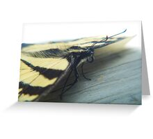 Butterfly Portrait Greeting Card