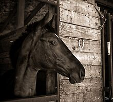 The Arabian by John  De Bord Photography