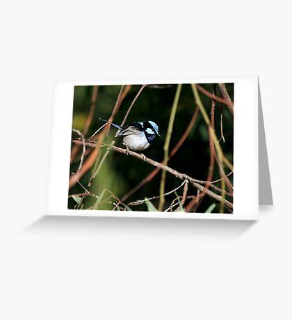 Blue Wren - Laratinga Wetlands Greeting Card