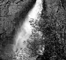 Upper Yosemite Fall Treescape by Benjamin Padgett