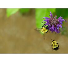 Beeing Together Photographic Print