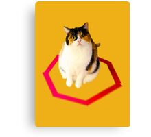 cat trap Canvas Print