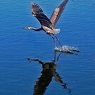 Great Blue Heron by joeschmoe96