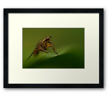 The Master Of His Domain Framed Print