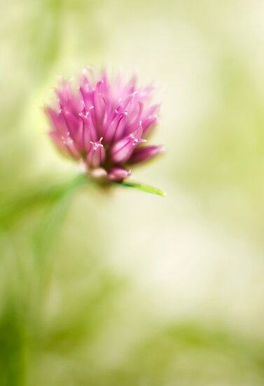 Chives by Ryan Watts