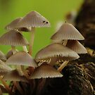 A fungal display in autumn woodland by miradorpictures