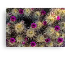 Blooming Cactus Canvas Print