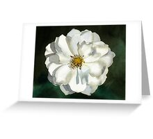 Blooming White Rose Watercolor Greeting Card