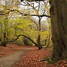 The way through the golden woods by miradorpictures