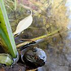 Frog in the Pond 77 by Barberelli