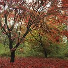 A red sun breaking through the autumn canopy by miradorpictures