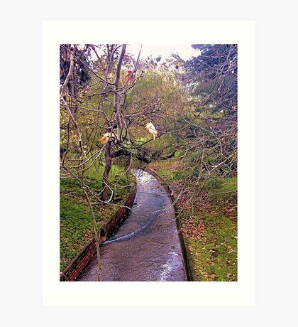 Creek in the Adelaide Botanic Gardens Art Print