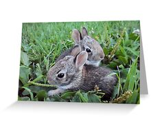 2 Baby Bunnies in the Grass - Nature Photography Greeting Card