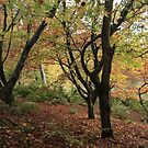 An autumn scene by miradorpictures