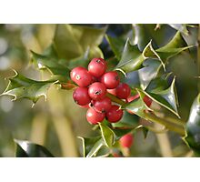 Holly Berrys Photographic Print