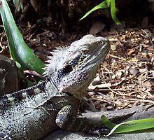 Ozzie Zoo Lizzard by roybob