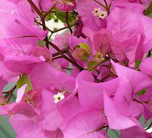 Variation in Pink  by beeden