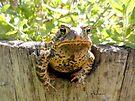 Toad peeking off the side of a garden wine barrel by Barberelli
