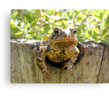 Toad peeking off the side of a garden wine barrel Canvas Print