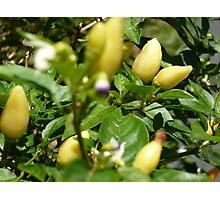 Chilis Yellow Photographic Print