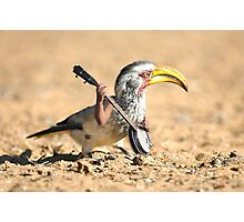 Grumpy Banjo Bird Photographic Print