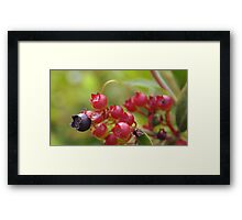 Red Blueberries Framed Print