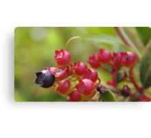 Red Blueberries Canvas Print