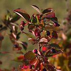 Berries & Leaves by Kathi Arnell