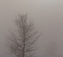 Tree in the Fog by Kathi Arnell