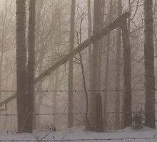 Foggy Woods by Kathi Arnell
