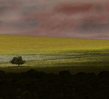 One tree Hill by justjulie