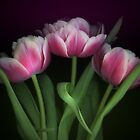 Pink Tulips by EbyArts