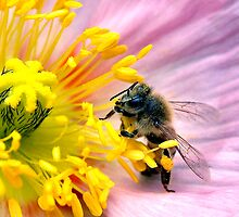 Reaching for the Pollen by SueAnne