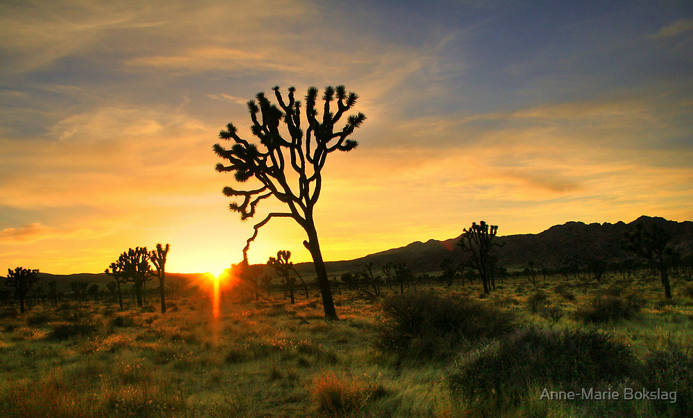 Joshua Tree National Park by Anne-Marie Bokslag