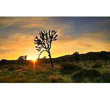Joshua Tree National Park Photographic Print