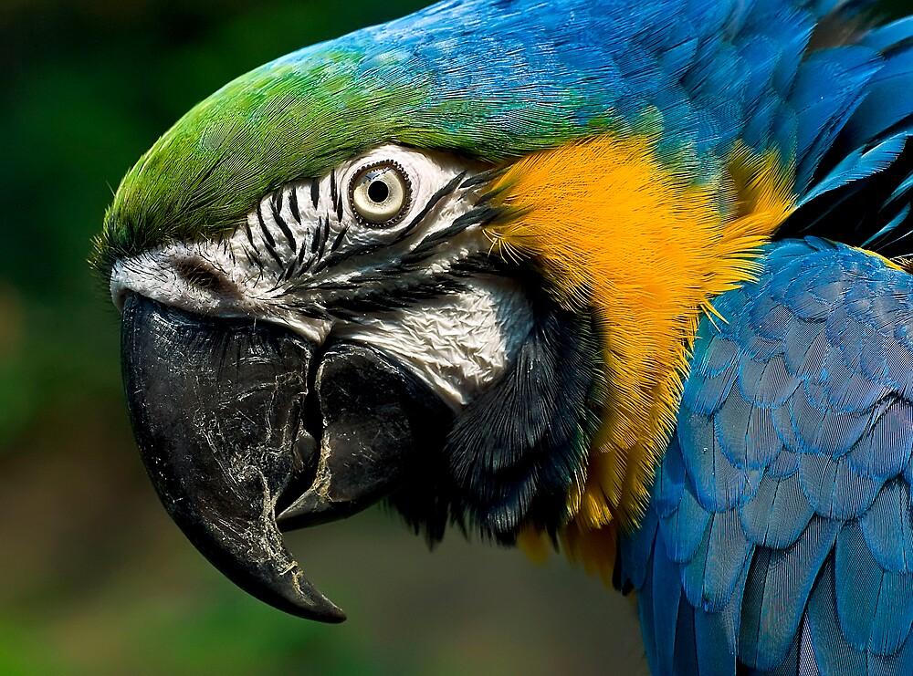 Polly by Cheri  McEachin