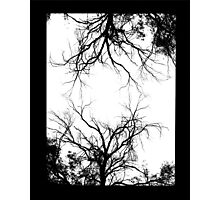 twin trees  Photographic Print