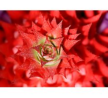 spicy red Photographic Print