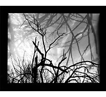 reach Photographic Print