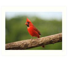 Go Cardinals! Art Print